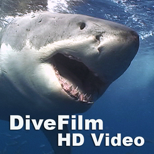Divefilm HD Video Podcast
